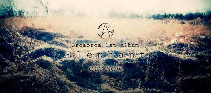 Elephant OUT NOW